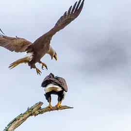 Eagle Mount 1
