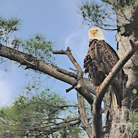 Eagle On Watch by Diann Fisher