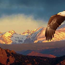 Eagle Soaring in the Rockies by Judi Dressler