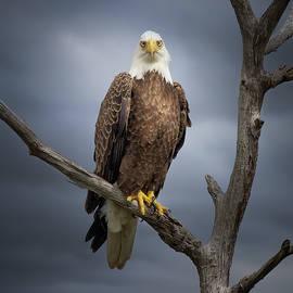 Eagle Storm by Mark Andrew Thomas