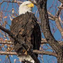 Eagle Time Begins by Loree Johnson