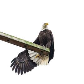 Eagle Yoga by Bob VonDrachek