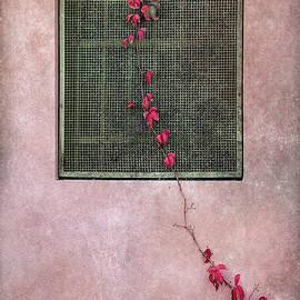 Early autumn by Barbara Corvino