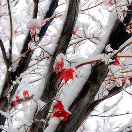 Early Autumn Snowfall by Donna Kennedy