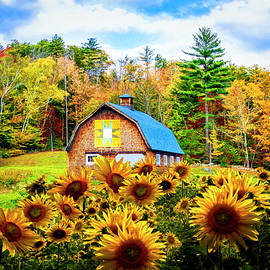 Early Autumn Sunflowers by Debra and Dave Vanderlaan