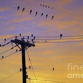 Early Birds Watching a Sunset by Diana Mary Sharpton