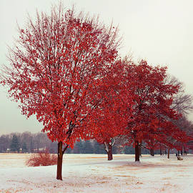 Early Snow by Denise Harty