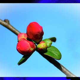 Early Spring Flower Bud by Constance Lowery
