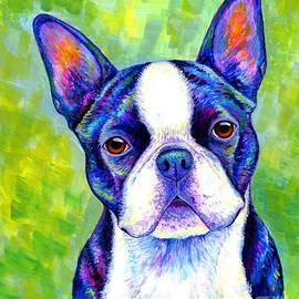 Effervescent - Colorful Boston Terrier Dog by Rebecca Wang