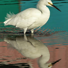 Egret and Color Reflected 1-18 by Bruce Frye