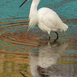 Egret and Color Reflex 01/03 by Bruce Frye