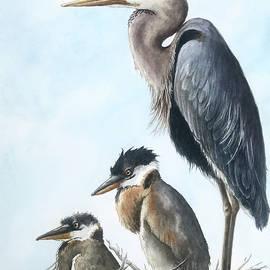 Egret Family by Linda Apple