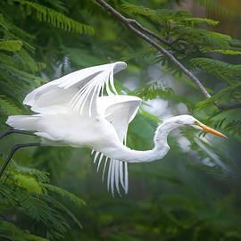 Egret Flight at Dawn by Mark Andrew Thomas