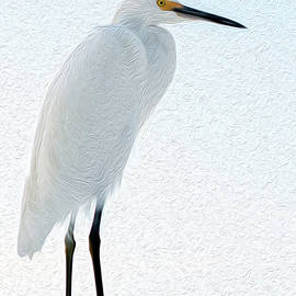 Egret in Texture by Debra Kewley