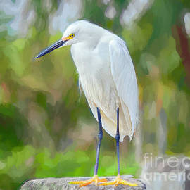 Egret Under the Palms Edition 2 by Judy Kay