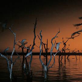 Egrets at Sunset, Flash by MaryJane Sesto