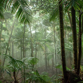 El Yunque Rain Forest by Kathi Isserman