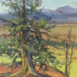 Elder by Nancy Avalon