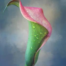 Elegant Cala by Terry Davis