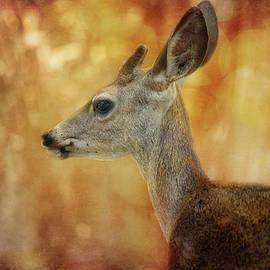 Elegant Deer by Terry Davis