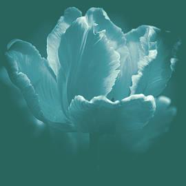 Elegant Tulip by Joan Han