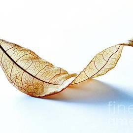 Elegantly Nature by Brenda Lawlor