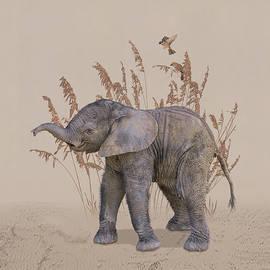 Elephant Calf Portrait by Spadecaller