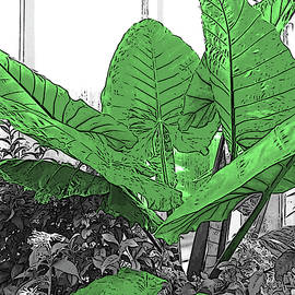 Elephant Ears Plant in Selective Color by Marian Bell