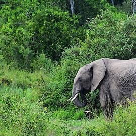 Elephant In The Bushes by Marta Kazmierska