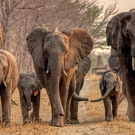 Elephant Panorama by John Haldane