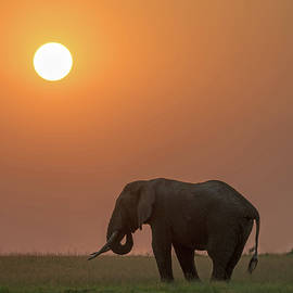 Elephant Sunset by Eric Albright
