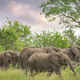Elephant Walk by Rebecca Herranen