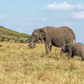 Elephants on the Grassland in Kenya by Lindley Johnson