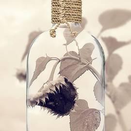 Elixir  by Alexandra Vusir