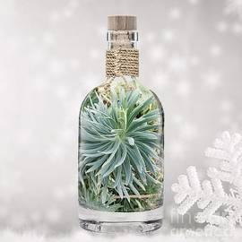 Elixir Green  by Alexandra Vusir