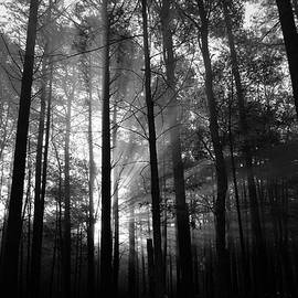 Embraced by the Light - BW by Dianne Cowen