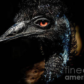Emu Beauty by RC- Photography LLC