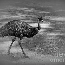 Emu Walking by Elaine Teague