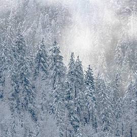 Enchanted Forest by Joy McAdams