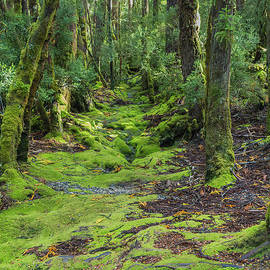 Enchanted Forest, Ronny Creek, Cradle Mountain, Tasmania, Austra by Elaine Teague