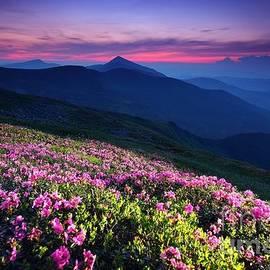Enchanted sunset by Julia Bernardes