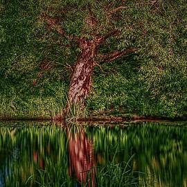 Enchanted tree #l3 by Leif Sohlman