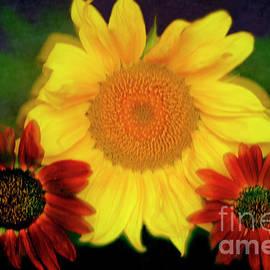 Enjoy Sunflowers. by Alexander Vinogradov