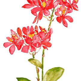 Epidendrum radicans orange ground orchid watercolor  by Color Color