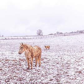 Equine And Bovine by Jim Love