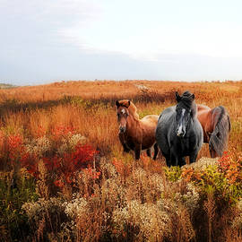 Equine Beauties by Carmen Macuga