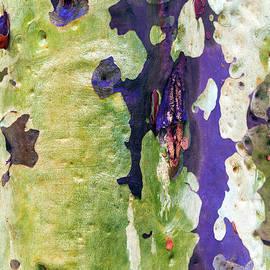 Eucalypt by Elaine Teague