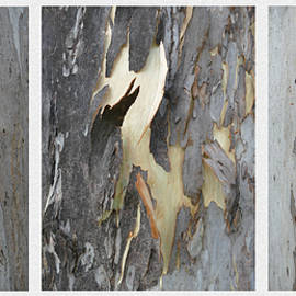Eucalyptus Bark Tryptich 2 by Maryse Jansen
