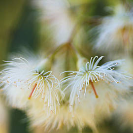 Eucalyptus Flower Snowflake by Joy Watson