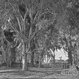 Eucalyptus trees, Lefkada, digital sketch by Paul Boizot